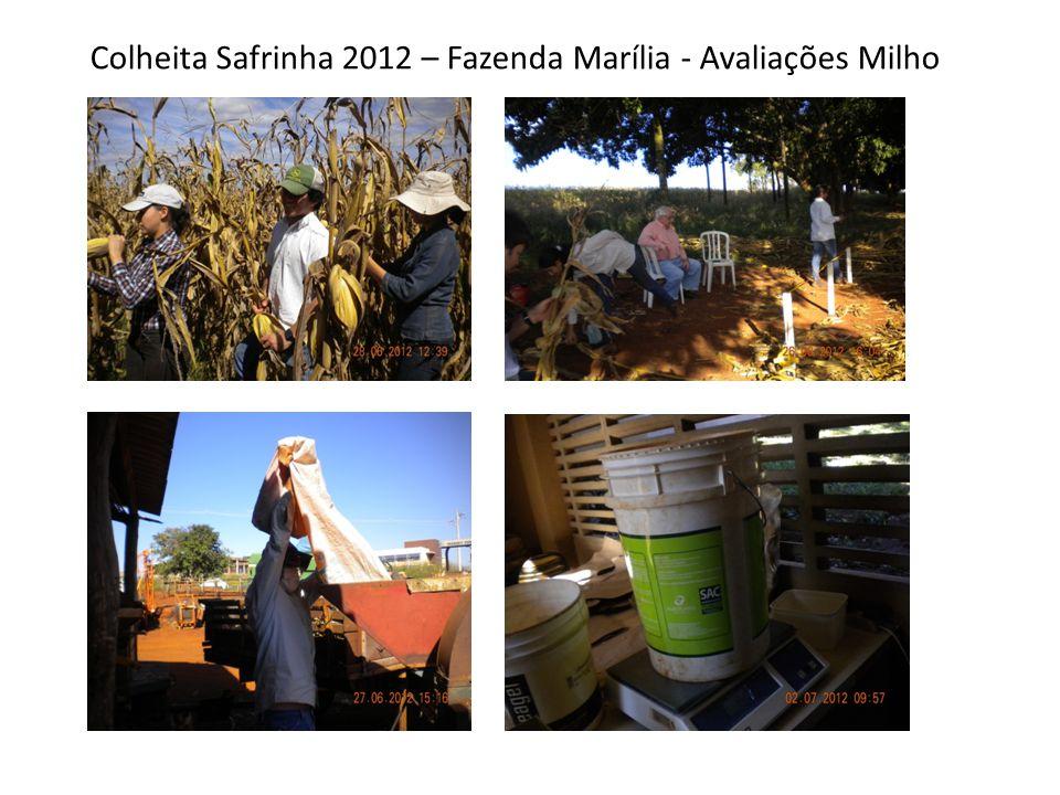 Colheita Safrinha 2012 – Fazenda Marília - Avaliações Milho