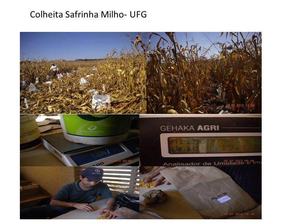 Colheita Safrinha Milho- UFG