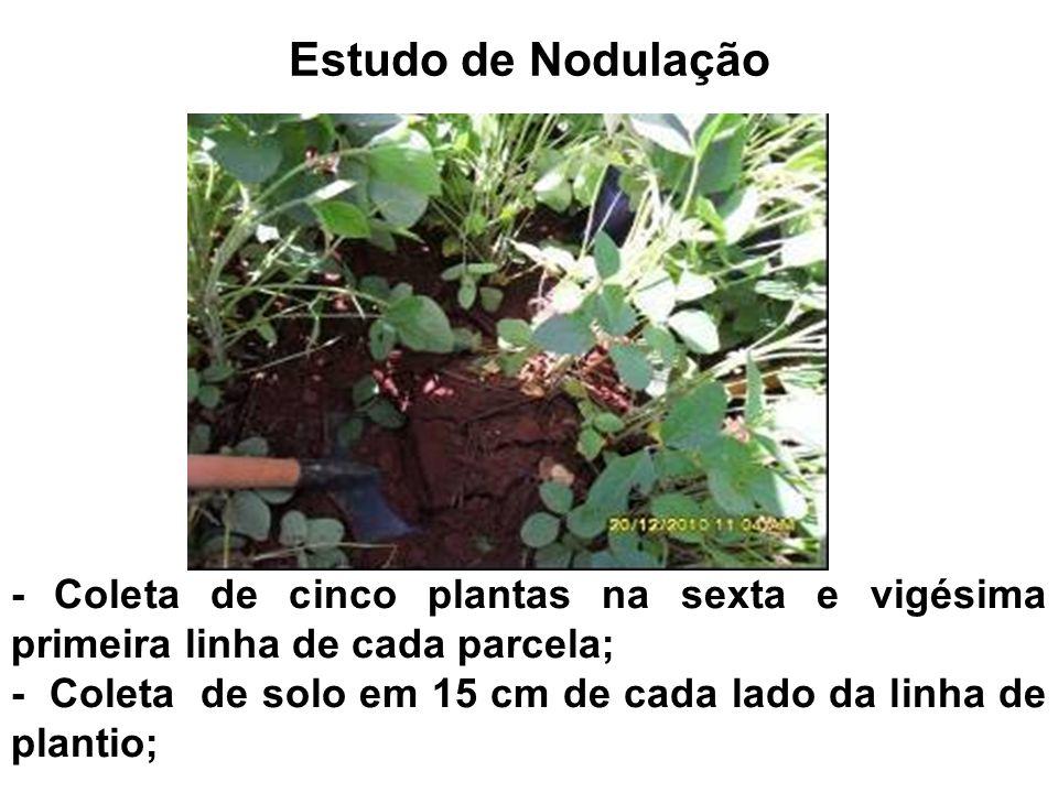 Estudo de Nodulação - Coleta de cinco plantas na sexta e vigésima primeira linha de cada parcela;