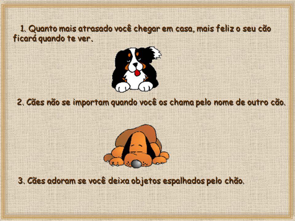 3. Cães adoram se você deixa objetos espalhados pelo chão.
