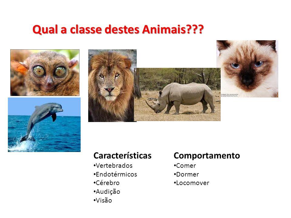 Qual a classe destes Animais