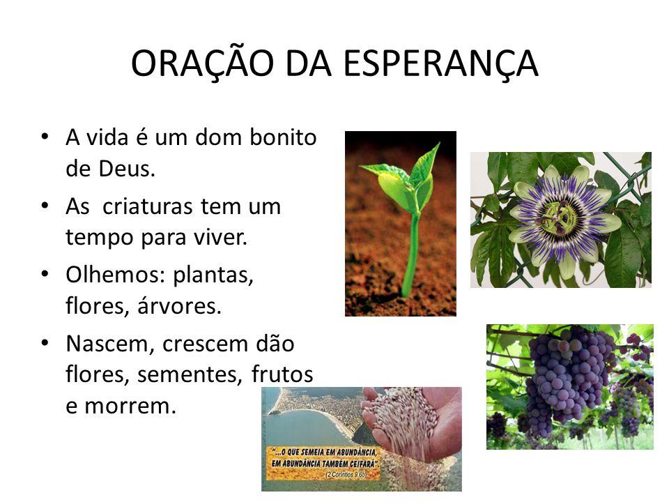 ORAÇÃO DA ESPERANÇA A vida é um dom bonito de Deus.