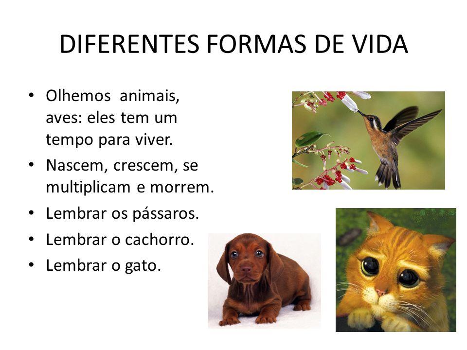DIFERENTES FORMAS DE VIDA