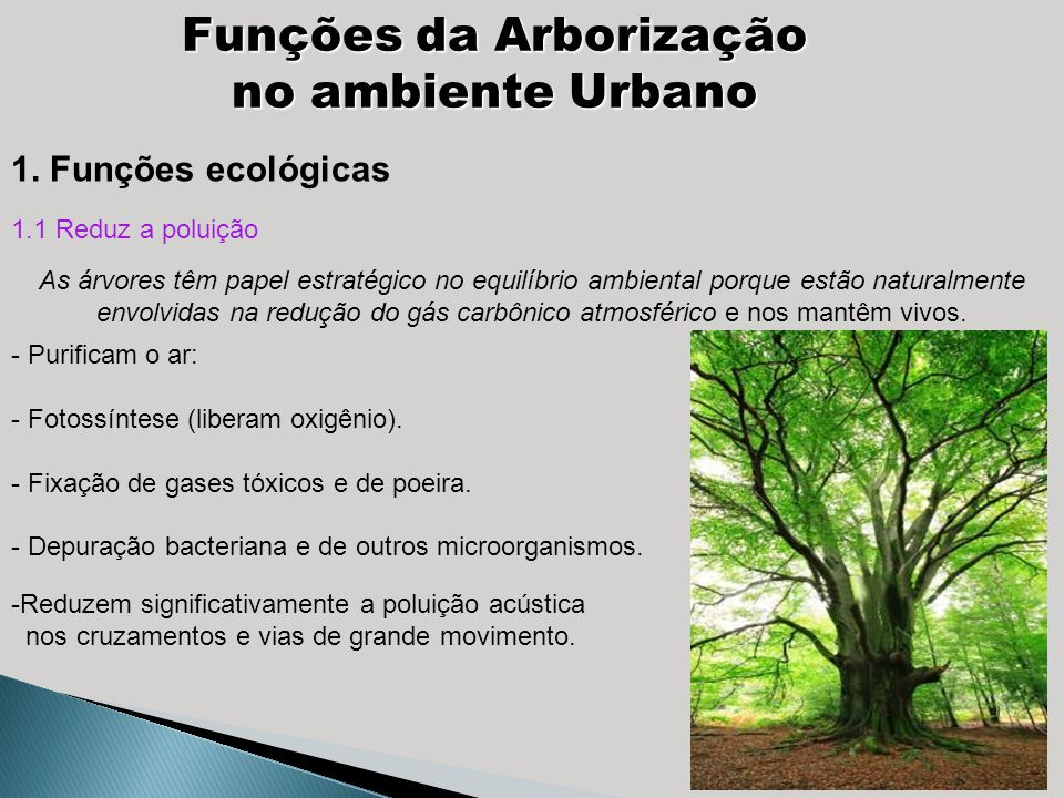Funções da Arborização