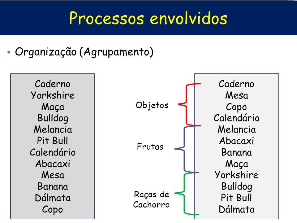 Processos envolvidos Organização (Agrupamento) Caderno Yorkshire Maça