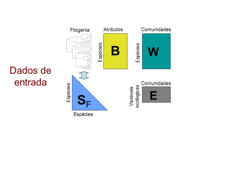 B SF W E Dados de entrada Filogenia Atributos Comunidades Espécies