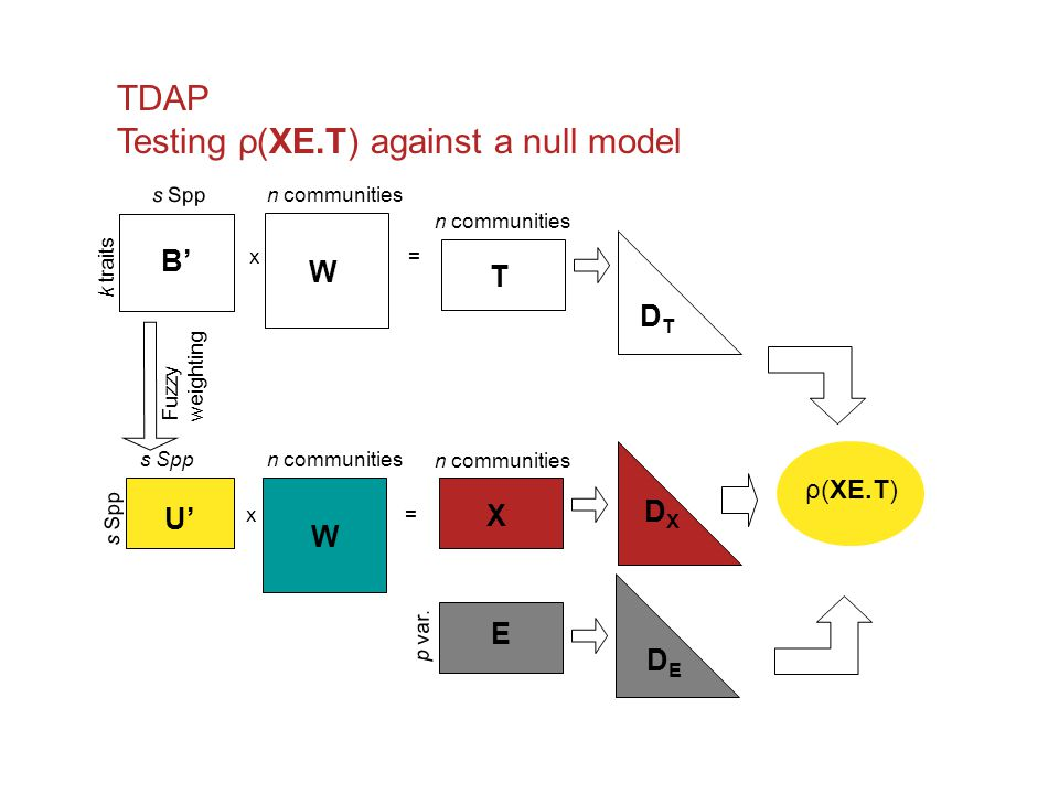 Testing ρ(XE.T) against a null model