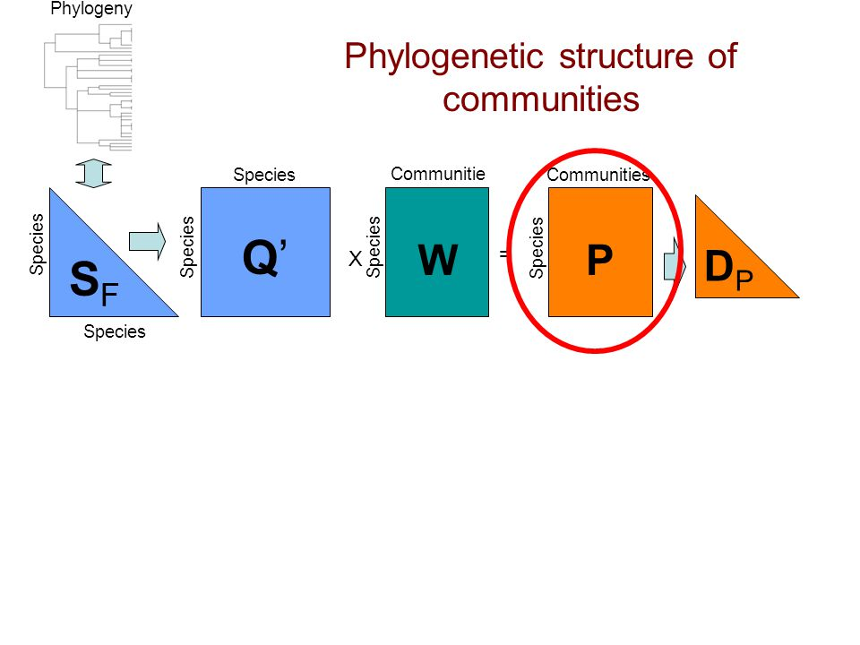 Phylogenetic structure of communities