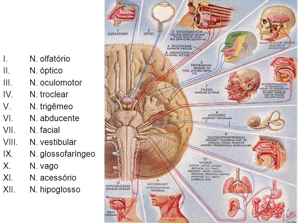 N. olfatório N. óptico. N. oculomotor. N. troclear. N. trigêmeo. N. abducente. N. facial. N. vestibular.
