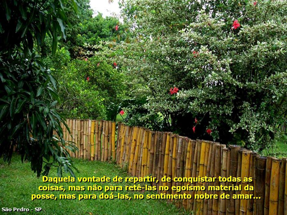 P0002907 - FAZENDA PALMEIRAS - SERRA DE SÃO PEDRO-700
