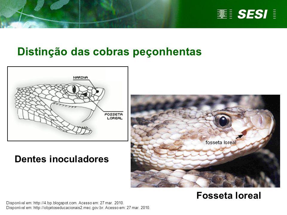 Distinção das cobras peçonhentas