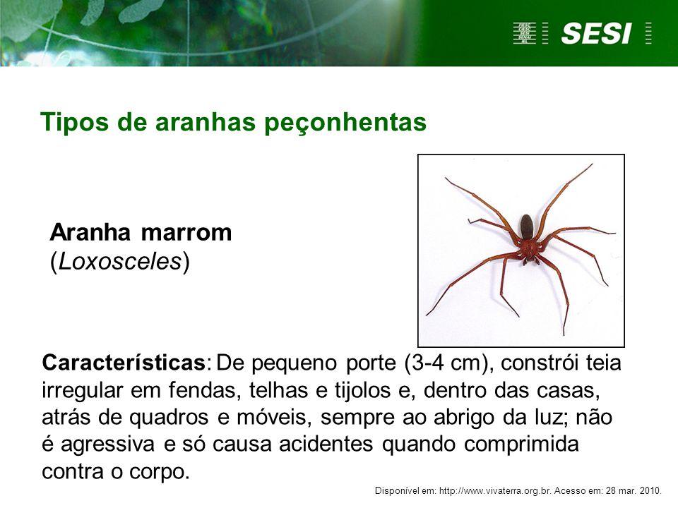 Aranha marrom (Loxosceles)
