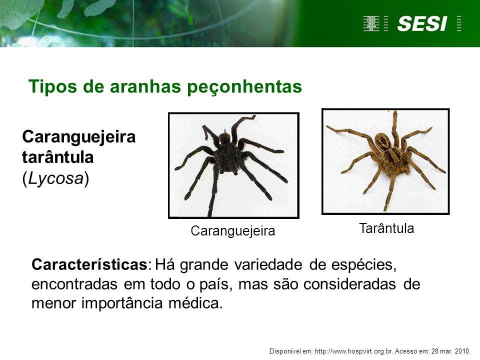 Caranguejeira tarântula (Lycosa)