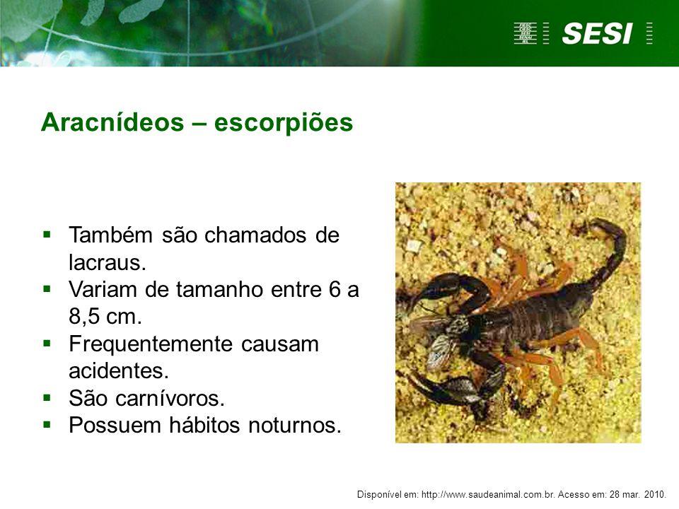 Aracnídeos – escorpiões