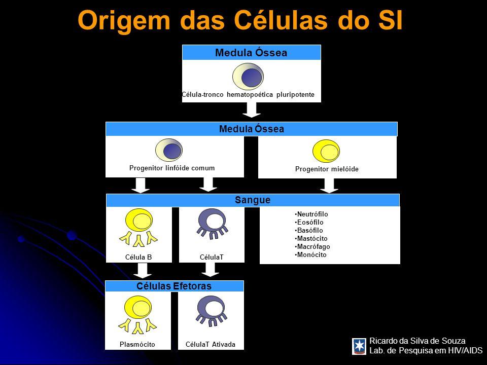 Origem das Células do SI