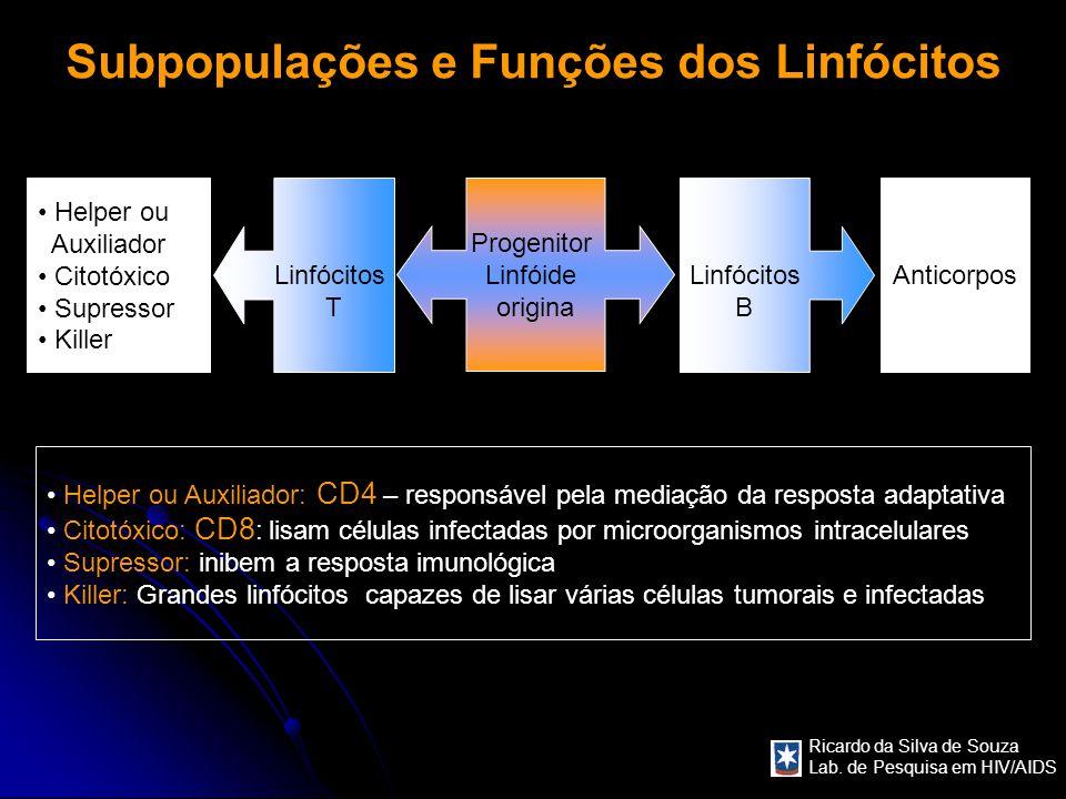 Subpopulações e Funções dos Linfócitos