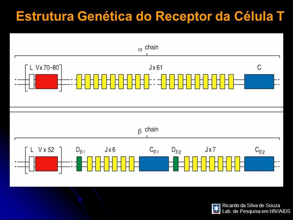 Estrutura Genética do Receptor da Célula T