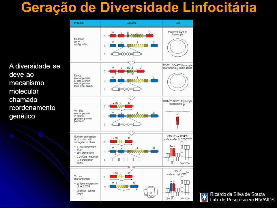 Geração de Diversidade Linfocitária