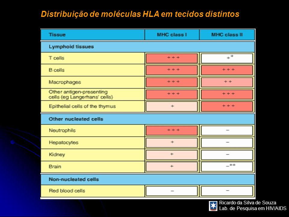 Distribuição de moléculas HLA em tecidos distintos