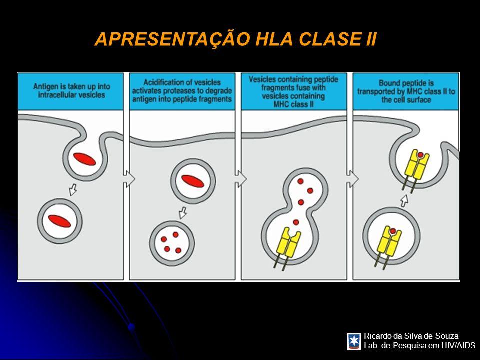 APRESENTAÇÃO HLA CLASE II