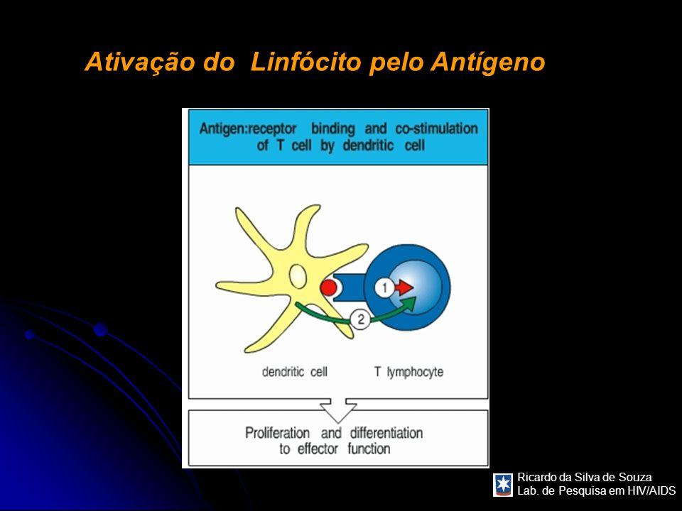 Ativação do Linfócito pelo Antígeno