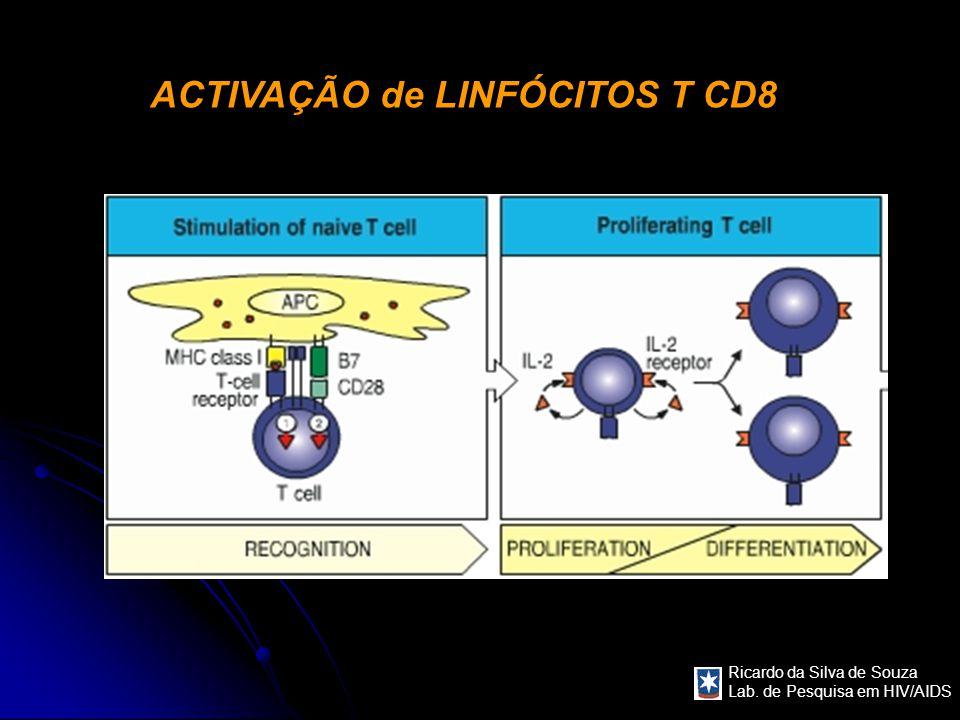 ACTIVAÇÃO de LINFÓCITOS T CD8