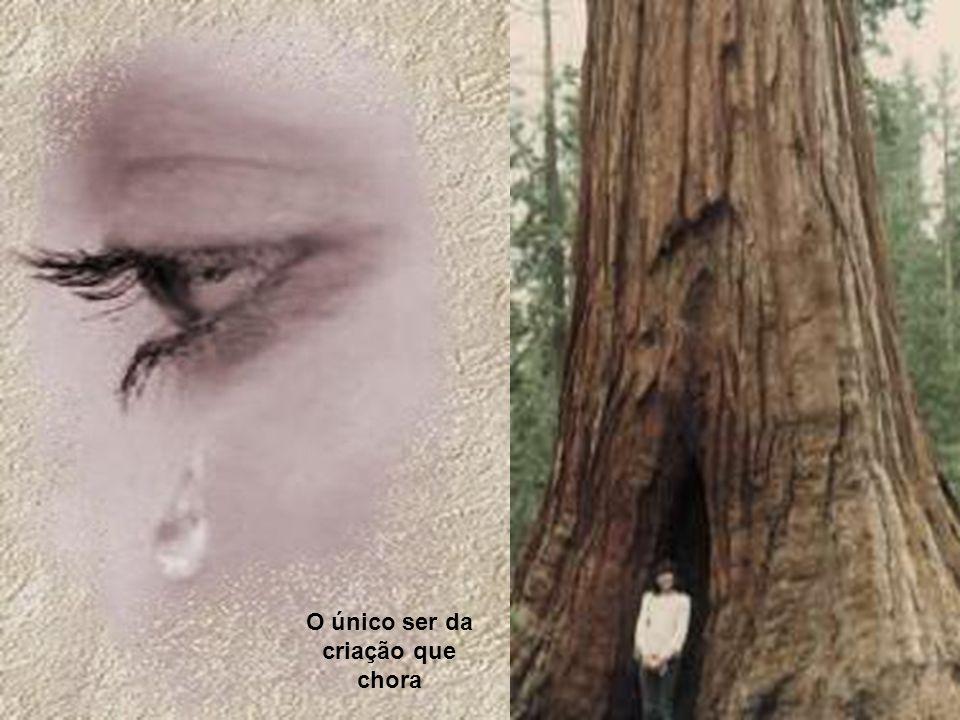 O único ser da criação que chora