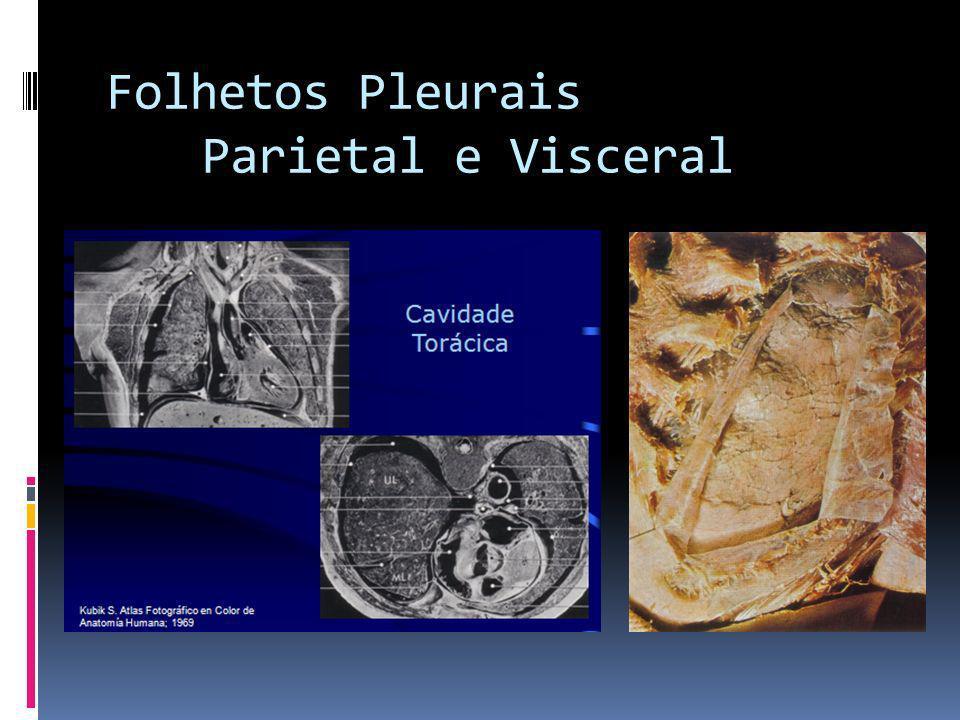 Folhetos Pleurais Parietal e Visceral