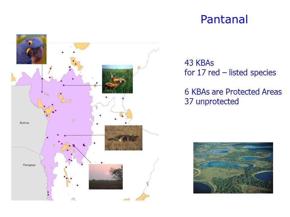 Pantanal 43 KBAs for 17 red – listed species