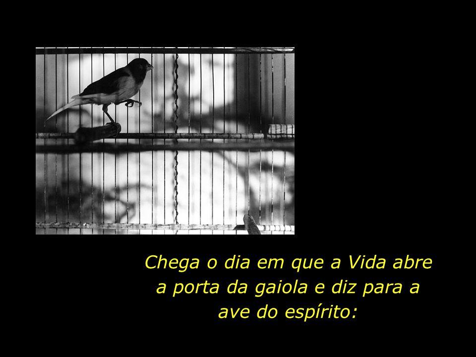 Chega o dia em que a Vida abre a porta da gaiola e diz para a ave do espírito: