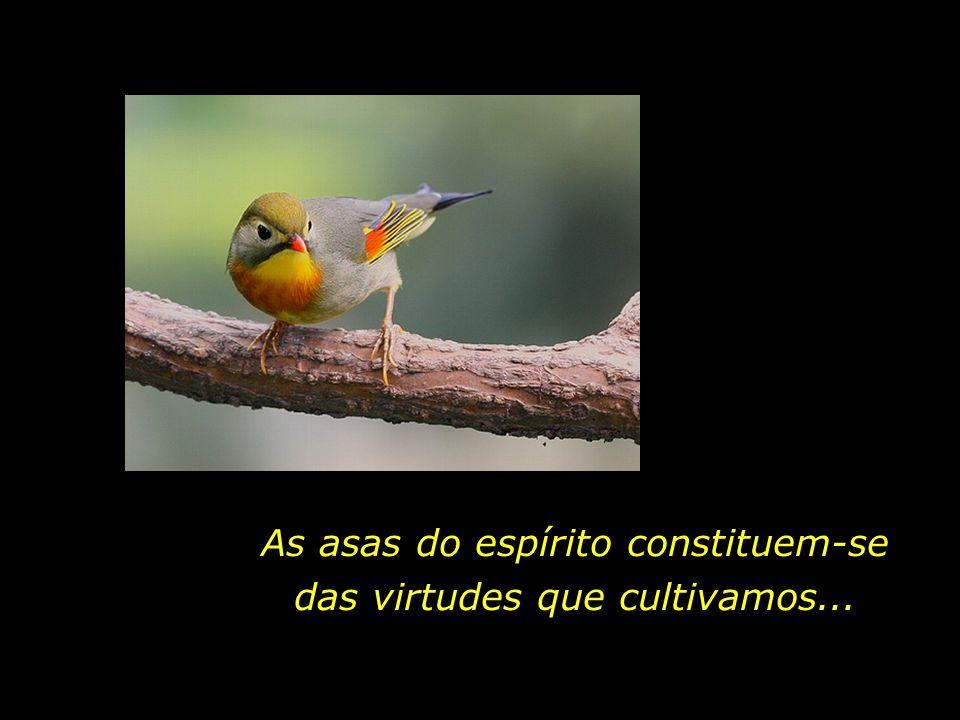 As asas do espírito constituem-se das virtudes que cultivamos...