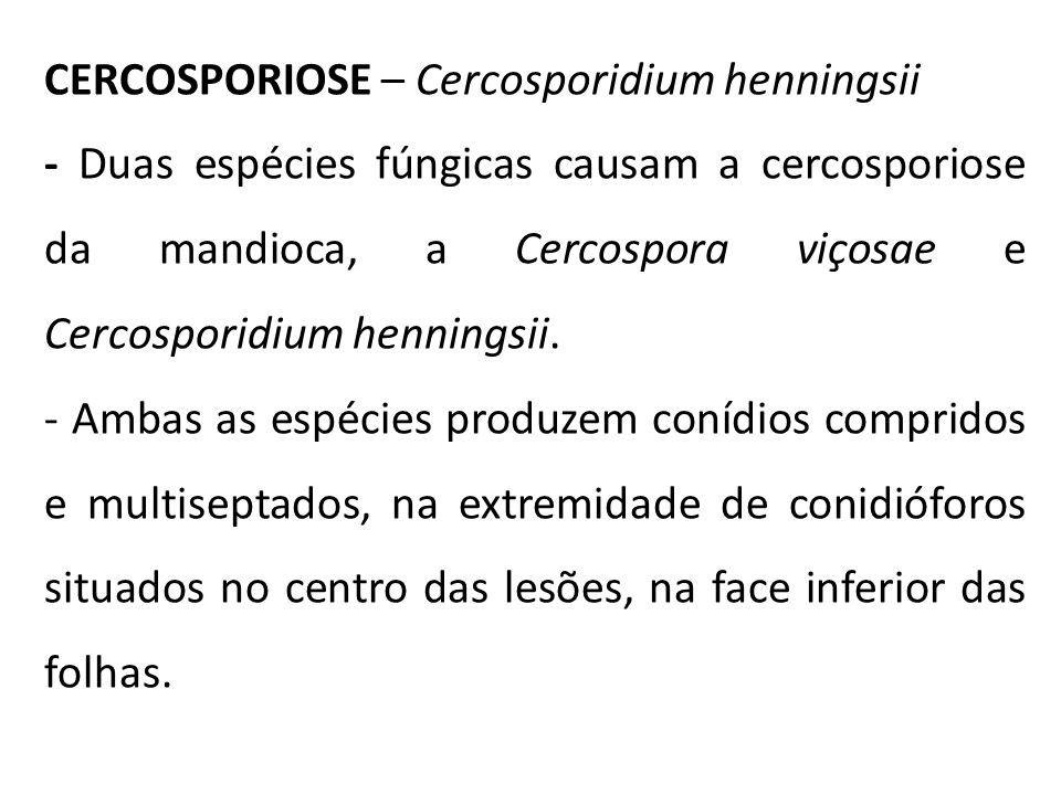 CERCOSPORIOSE – Cercosporidium henningsii