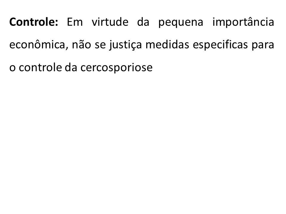 Controle: Em virtude da pequena importância econômica, não se justiça medidas especificas para o controle da cercosporiose