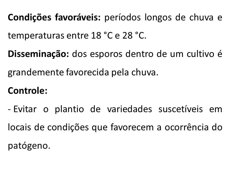 Condições favoráveis: períodos longos de chuva e temperaturas entre 18 °C e 28 °C.