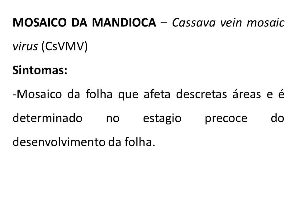 MOSAICO DA MANDIOCA – Cassava vein mosaic virus (CsVMV)
