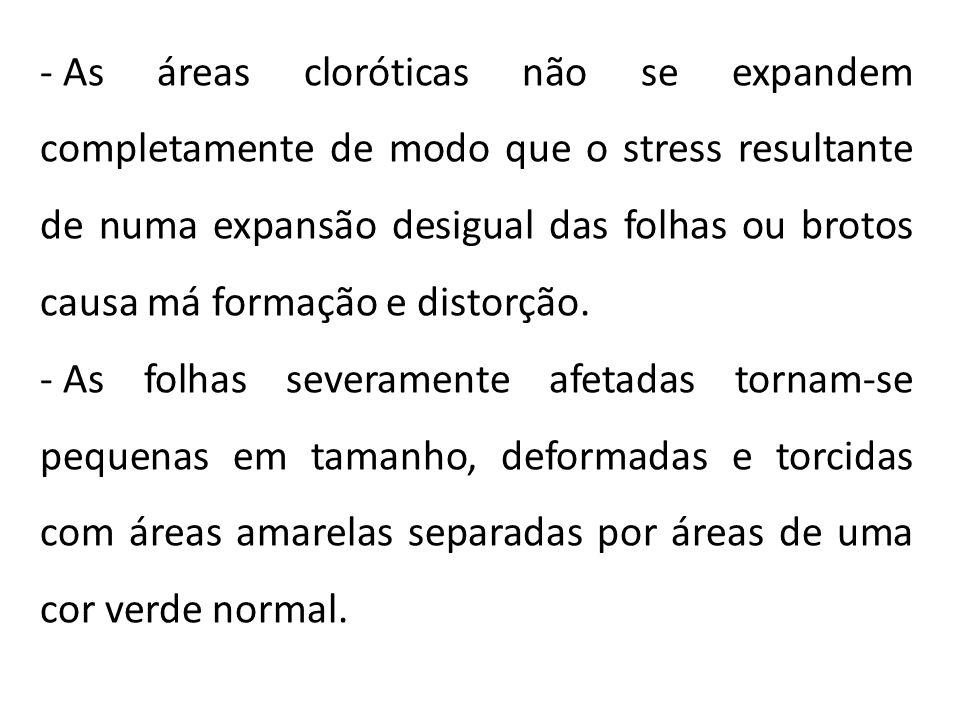 As áreas cloróticas não se expandem completamente de modo que o stress resultante de numa expansão desigual das folhas ou brotos causa má formação e distorção.