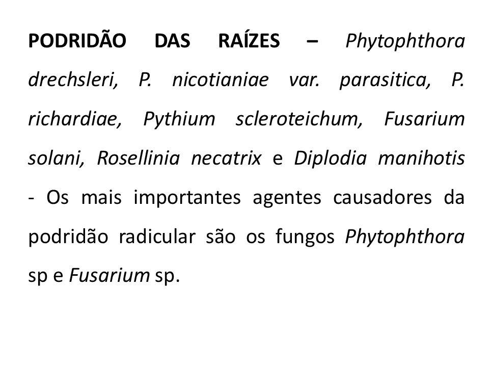 PODRIDÃO DAS RAÍZES – Phytophthora drechsleri, P. nicotianiae var