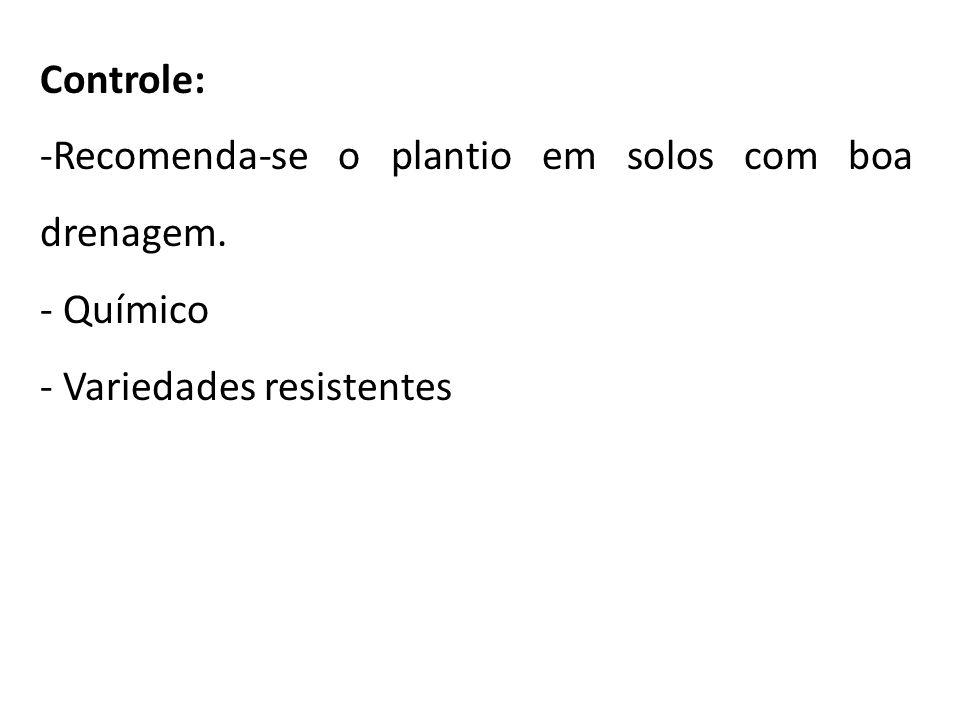 Controle: Recomenda-se o plantio em solos com boa drenagem. Químico Variedades resistentes
