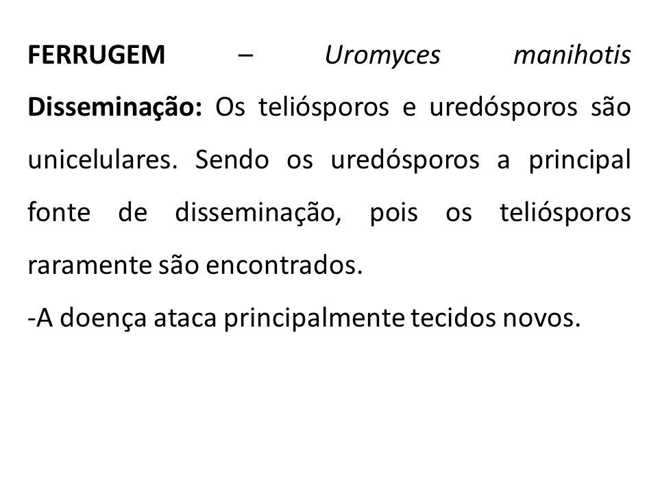 FERRUGEM – Uromyces manihotis Disseminação: Os teliósporos e uredósporos são unicelulares. Sendo os uredósporos a principal fonte de disseminação, pois os teliósporos raramente são encontrados.