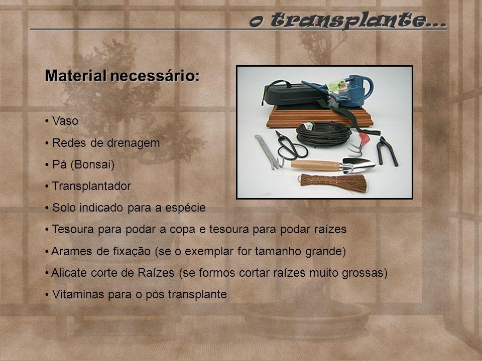 o transplante… Material necessário: Vaso Redes de drenagem Pá (Bonsai)