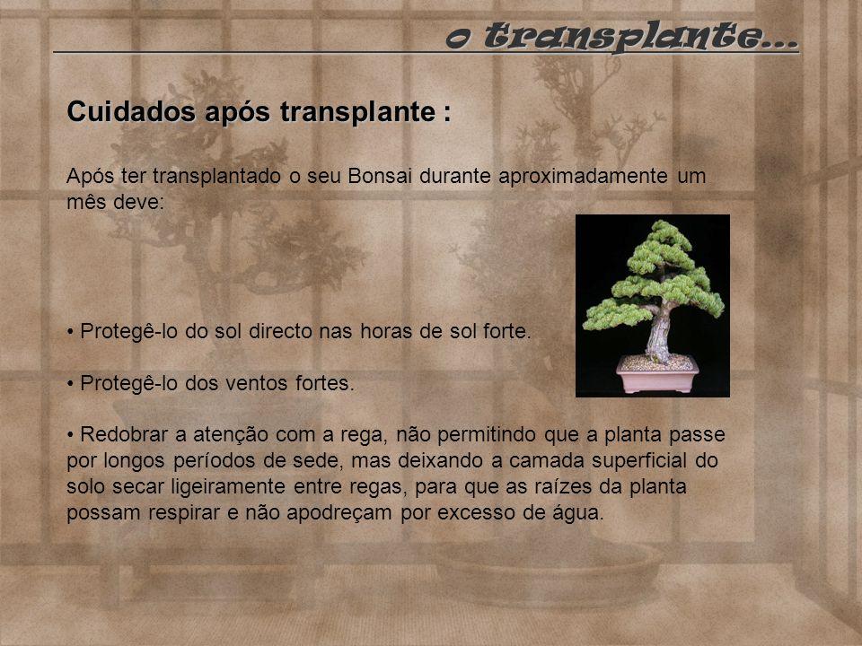 o transplante… Cuidados após transplante :