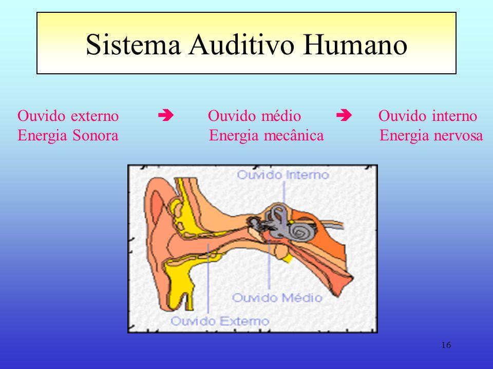Sistema Auditivo Humano
