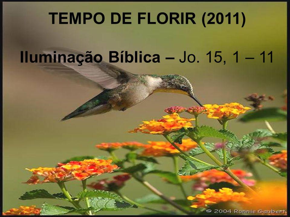 Iluminação Bíblica – Jo. 15, 1 – 11