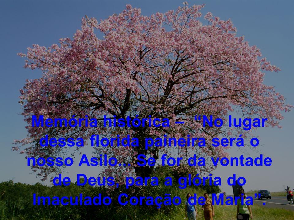 Memória histórica – No lugar dessa florida paineira será o nosso Asilo...