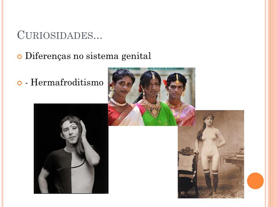 Curiosidades... Diferenças no sistema genital - Hermafroditismo