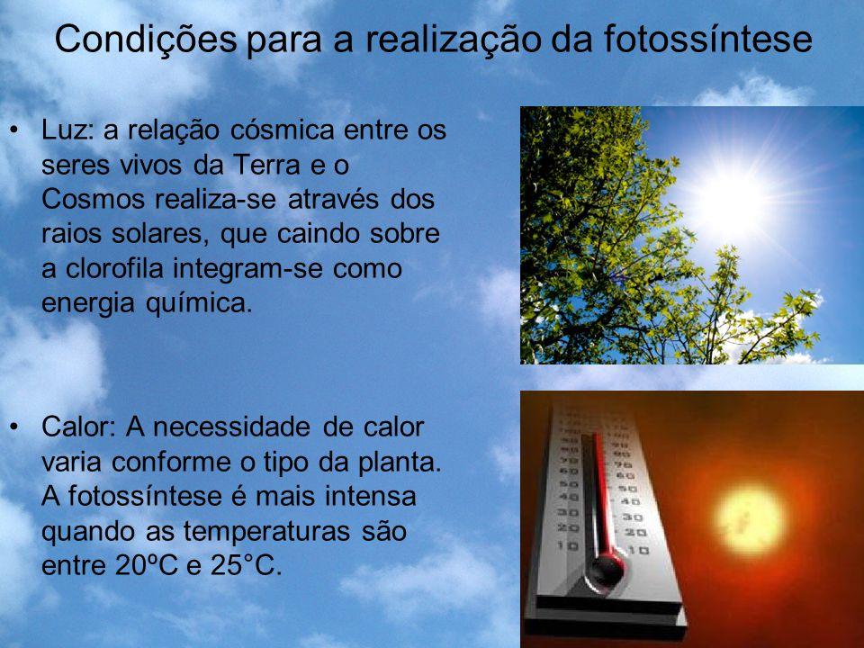 Condições para a realização da fotossíntese