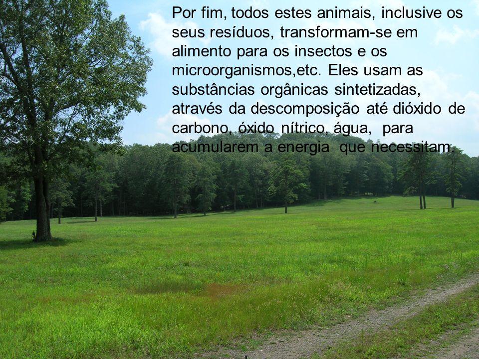 Por fim, todos estes animais, inclusive os seus resíduos, transformam-se em alimento para os insectos e os microorganismos,etc.