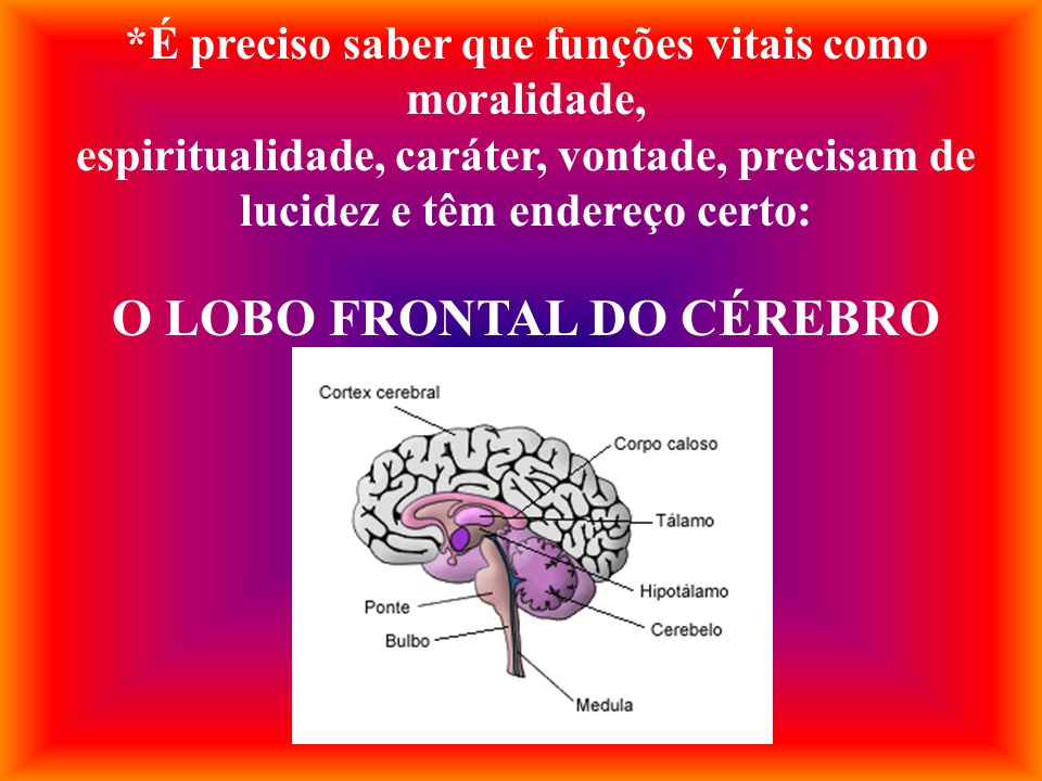O LOBO FRONTAL DO CÉREBRO