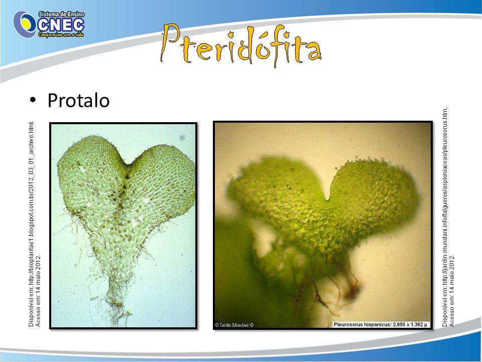 Pteridófita Protalo. Disponível em: http://jardin-mundani.info/falgueres/aspleniaceas/pleurosorus.htm. Acesso em: 14 maio 2012.