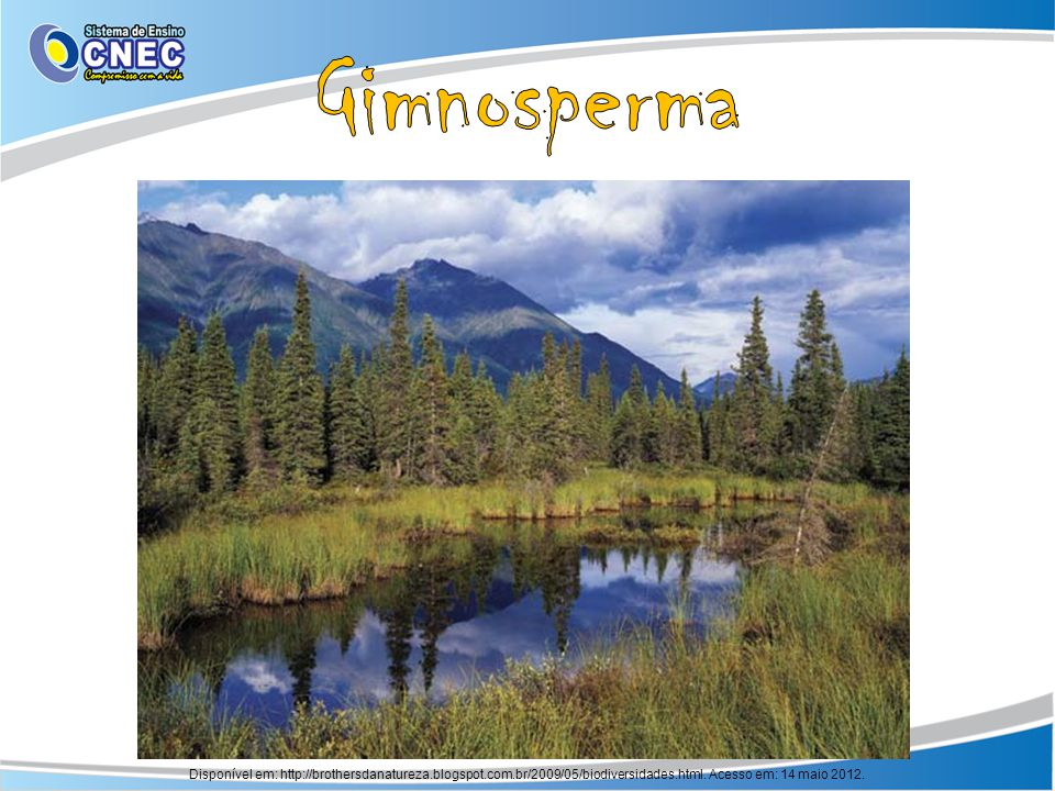 Gimnosperma Disponível em: http://brothersdanatureza.blogspot.com.br/2009/05/biodiversidades.html.